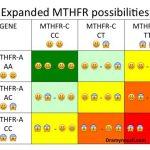 MTHFR GENE mutazione